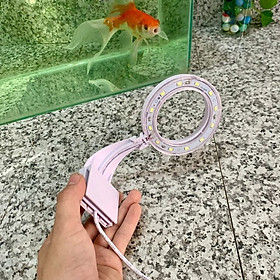 Đèn bể cá LED trắng dành cho bể cá mini, bể thủy sinh