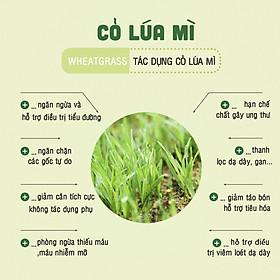 Lon Bột cỏ lúa mì nguyên chất Dalahouse 150g - Detox hoàn toàn tự nhiên