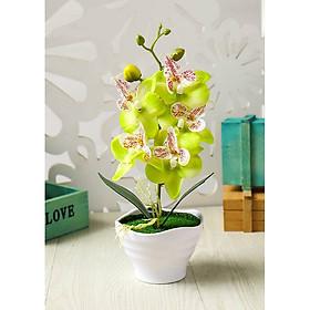 Chậu cây hoa giả vân nổi miệng loe lượn sóng hoa lan hồ điệp