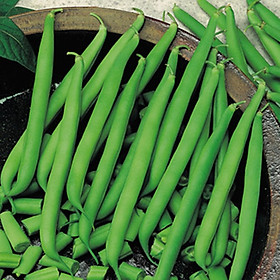 Hạt giống đậu trạch lai