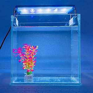 Bể cá mini để bàn 20x10x20cm Combo Hồ cá + đèn + Lọc