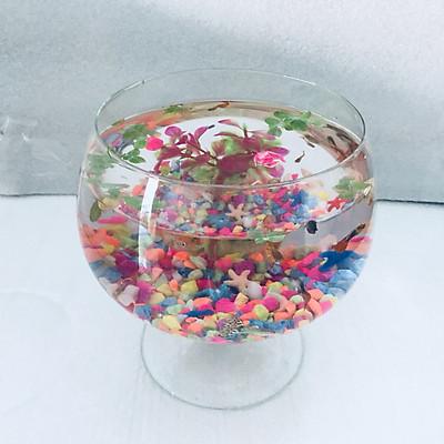 Bể cá mini để bàn LC2 - Tặng phụ kiện