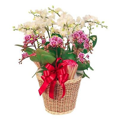 Giỏ hoa tươi - Ngưỡng Mộ Và Quý Phái 4183