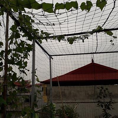Lưới Trồng Cây, Lưới Giàn Leo Cho Cây 3m x 3m