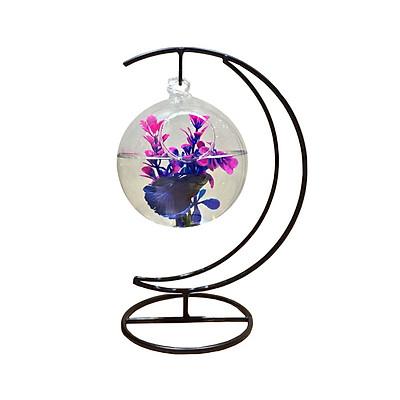 Bể cá mini treo cung trăng 12