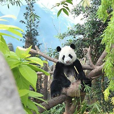 Vé Tham Quan River Safari Singapore