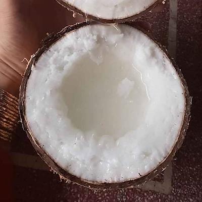 [Chỉ giao HN] - Dừa sáp đặc biệt - quả