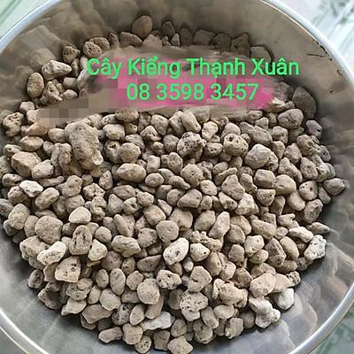 Đá Pumice giúp đất thoát nước tốt, thích hợp trồng sen đá, Xương rồng, Địa Lan, Phong Lan (Bịch 500 gam) size 5-8mm