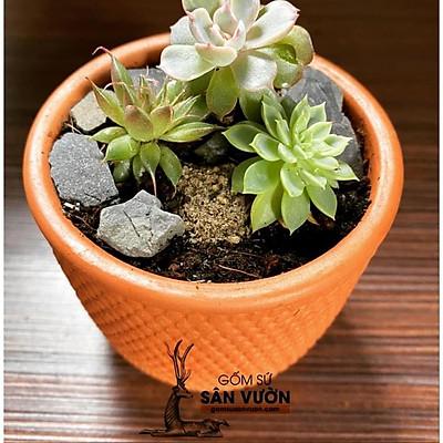 Chậu gốm đất nung terracotta Vân Gạch trồng sen đá, xương rồng size 8cm (1 cái)