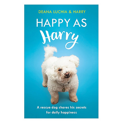 Happy as Harry: A rescue dog shares his secrets for daily happiness
