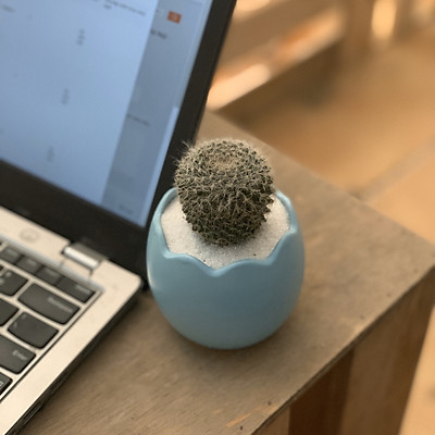 Cây Xương Rồng Lông Thiên Nga - 7x7x20 Cm - Chậu Cây Mini Để Bàn - Chậu Sứ Trồng Cây Dáng Quả Trứng – Cây Xương Rồng Mini Thật