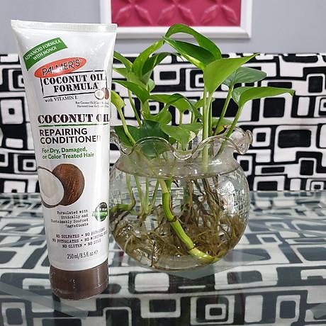 Dầu gội và dầu xã dưỡng ẩm, phục hồi và kích thích mọc tóc từ dừa Palmer s Coconut Oil Formula 8