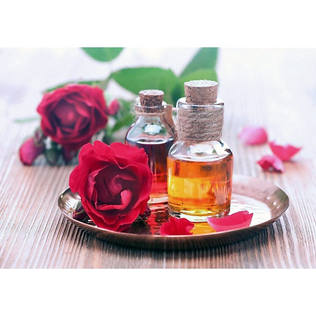 Tinh dầu hoa Hồng 100ml Mộc Mây - tinh dầu thiên nhiên nguyên chất 100% - chất lượng và mùi hương vượt trội 14