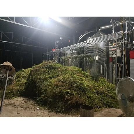 Tinh dầu hoa Ngũ Sắc (hoa cỏ hôi) 10ml Mộc Mây - tinh dầu nguyên chất từ thiên nhiên - Có kiểm định Bộ Y Tế, chất lượng và mùi hương vượt trội 4