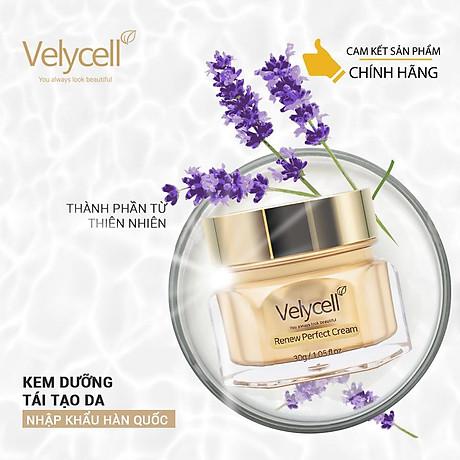 Kem dưỡng da Velycell Renew perfect cream 30ml 1