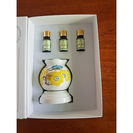 Hai hộp chai tinh dầu tràm gió Đồng Tháp Mười 10ml (có đèn xông tinh dầu) 1