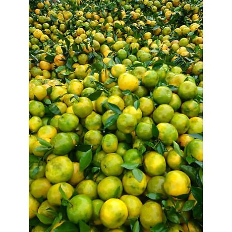 Tinh dầu Vỏ Quýt 50ml Mộc Mây - tinh dầu thiên nhiên nguyên chất Organic hữu cơ 100% - chất lượng và mùi hương vượt trội 2