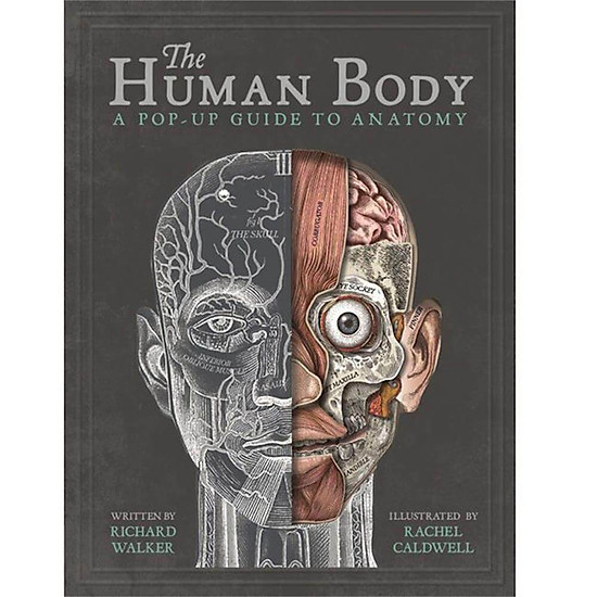 The Human Body : A Pop-Up Guide to Anatomy