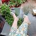 Giày cao gót quai trong đính đá mặt trời sang chảnh 5p - CGhoađá5p