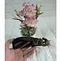 Lược trải đầu sừng trâu đen hình rồng cuộn - LRD01 thumbnail