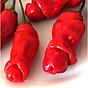 Bộ 2 gói Hạt giống ớt cu tí thumbnail
