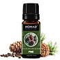 Tinh Dầu Thiên Nhiên Hương Gỗ Thông Nomad Essential Oils Pine 10ml thumbnail