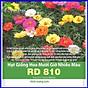 Hạt Giống Hoa Mười Giờ Mix Nhiều Màu thumbnail