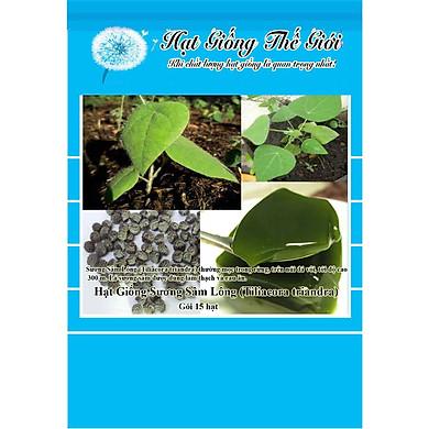 15h Hạt Giống Sương Sâm Lông (Tiliacora triandra)