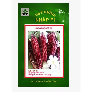 50 hạt giống ngô nữ hoàng đỏ