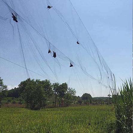 Lưới Bẫy Chim Tổng Hợp cao 5m
