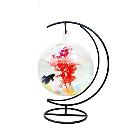 Bể cá mini treo cung trăng tròn 14