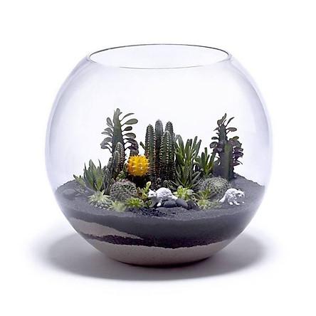 Chậu thủy tinh, bể cá mini D14H12