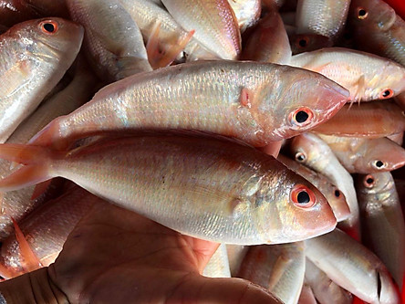 Cá hường làm sạch - Khay 500g