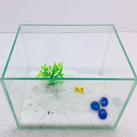 Bể cá mini để bàn 20x14x14 tiểu cảnh
