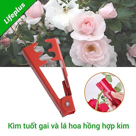 Kìm tuốt gai và lá hoa hồng tươi
