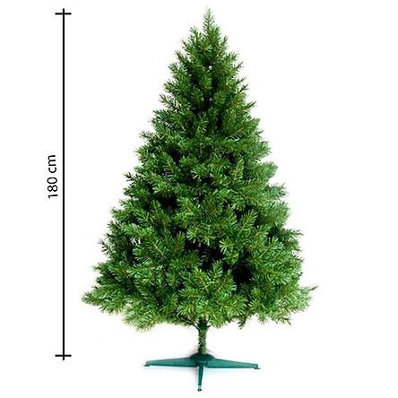 Cây thông noel màu xanh đầu tròn 2in (Cây 180cm)