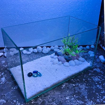 Bể cá để bàn - 30x17x17 tặng phụ kiên- hồ cá mini