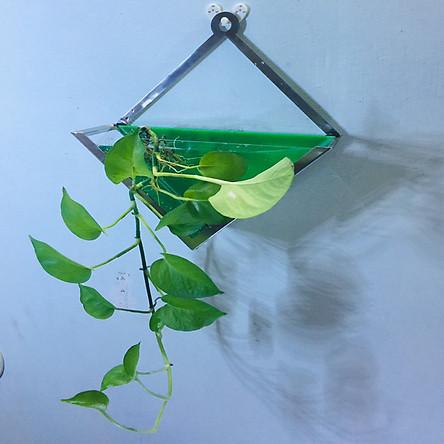 Bể cá mini treo tường , trồng cây