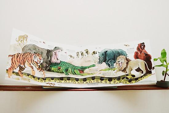 Big Book Of Big Animals – Cuốn Sách Khổng Lồ Về Các Loài Động Vật Khổng Lồ