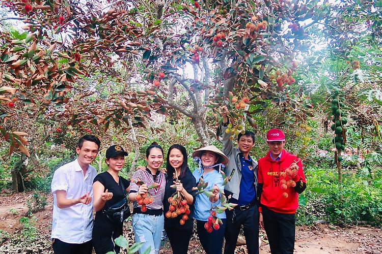 Tự do hái trái cây tươi ngon ở vườn trái cây Cồn Sơn - tour miền Tây 4 ngày 3 đêm