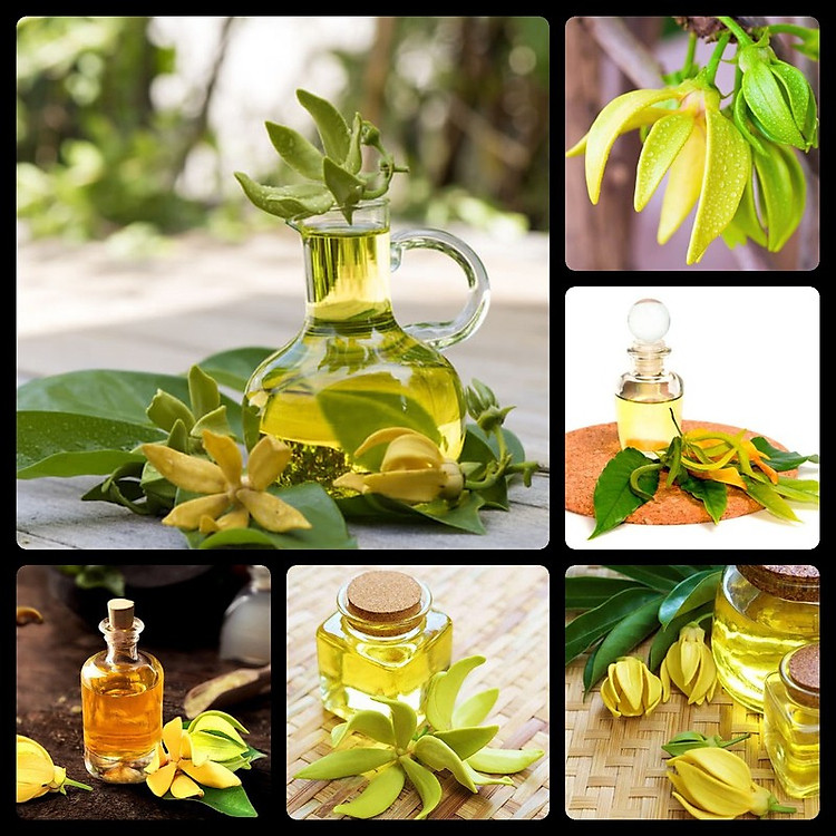 Tinh dầu Ngọc Lan Tây 100ml Mộc Mây - tinh dầu thiên nhiên nguyên chất 100% - chất lượng và mùi hương vượt trội 11