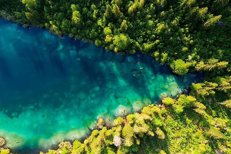 Hình ảnh một khu rừng tự nhiên rậm rạp, có một dòng sông chảy ở giữa Hình ảnh phía trên. Đây là hình ảnh mô tả FHD.