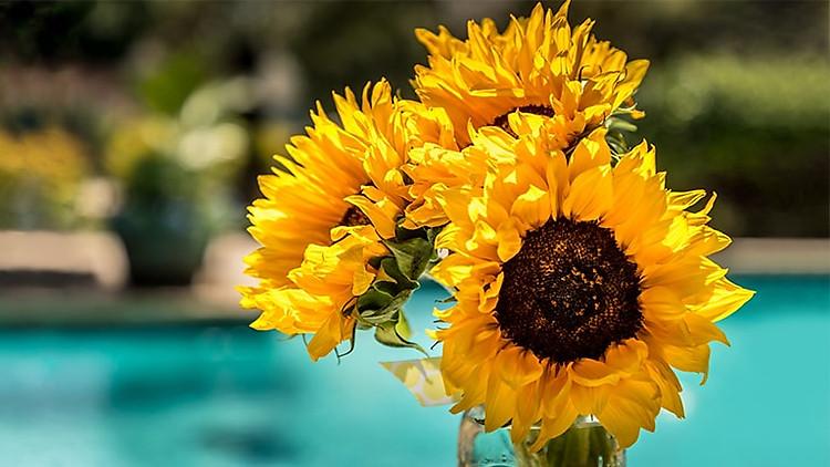 Thẻ này mô tả tính năng màu động. Hình ảnh hoa hướng dương.
