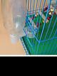 Bộ 10 chiếc Núm uống nút cổ chai, tự động cấp nước gia cầm màu ngẫu nhiên ( KHÔNG KÈM BÌNH NƯỚC) máng uống tự động cho chim