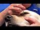 Dung dịch nhỏ mắt trị viêm mắt chó mèo genta drop 10ml