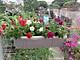 Chậu trồng rau, trồng hoa thông minh ban công 67x24cm