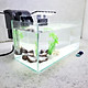 Bể cá mini để bàn có hồ lọc đèn phụ kiện đầy đủ