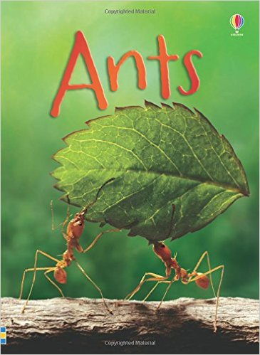 Usborne Ants