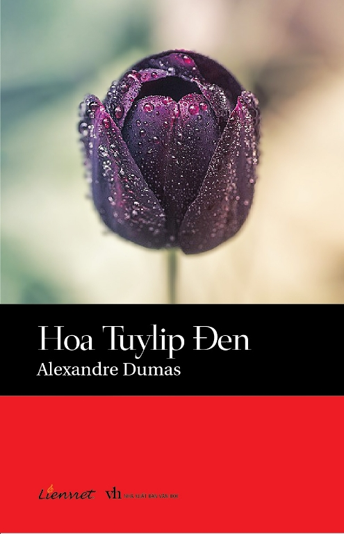 Hoa Tuylip Đen