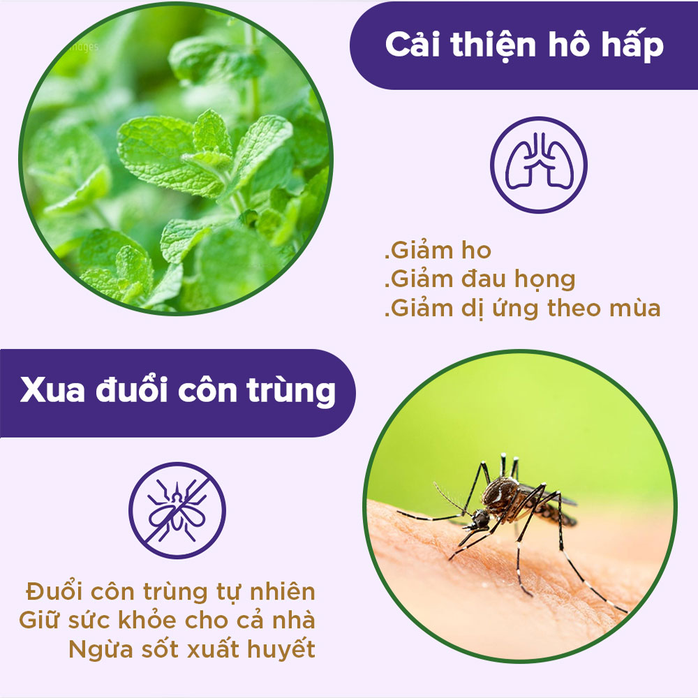[30ml] Tinh dầu Bạc hà NOOKY 100% Thiên Nhiên - TORO FARM
